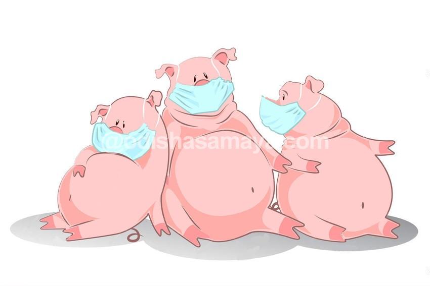 Swelling Swine Flu kills 51 more, Affacted number breaches 16k mark