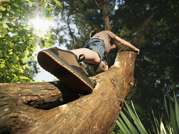 Climbing Tree and Balancing on Beam can Boost Cognitive skills: Study