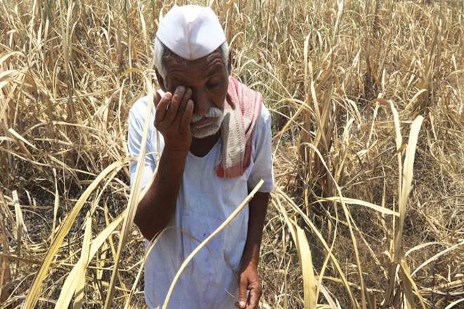 Odisha government pegs pest-damage at 1.10 lakh hectare