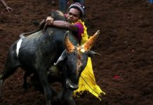 Bull taming sport event: seven injured in Madurai District