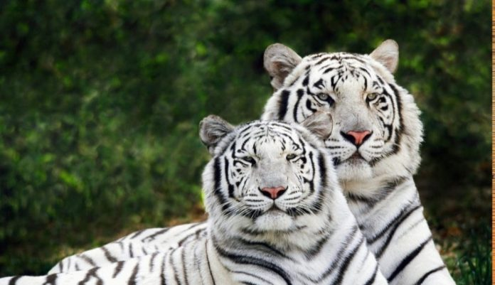World Wildlife Day: VP, PM stress on protection of animals