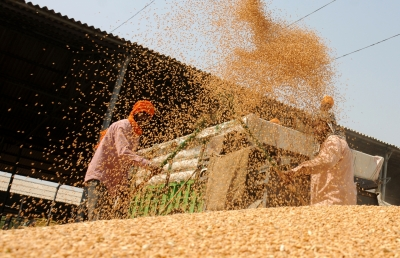 Cabinet approves hike in MSP for all mandated Rabi crops